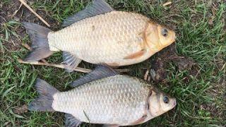 Рыбалка на фидер. Фидерная рыбалка на карася. Фидер для начинающих. Рыбалка 2021